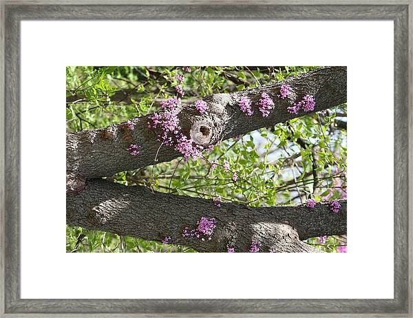 Branches Of Color Framed Print by Eric Irion