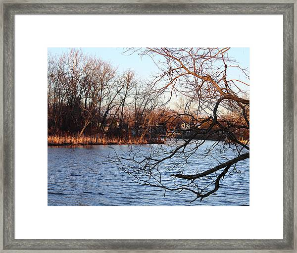 Branches Over Water Framed Print