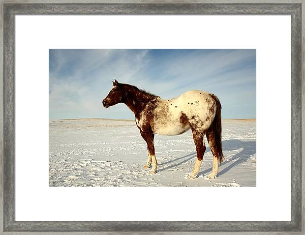 Framed Print featuring the photograph Brandy by Bryan Smith