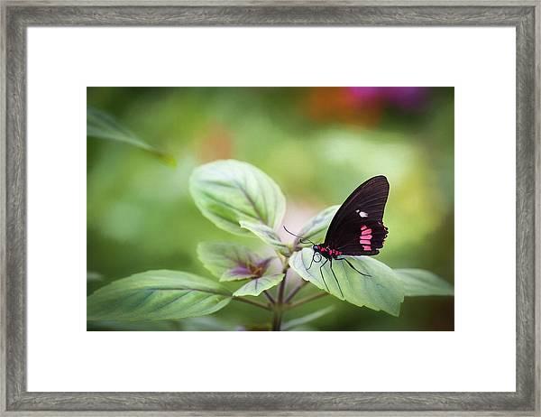 Brave Butterfly  Framed Print