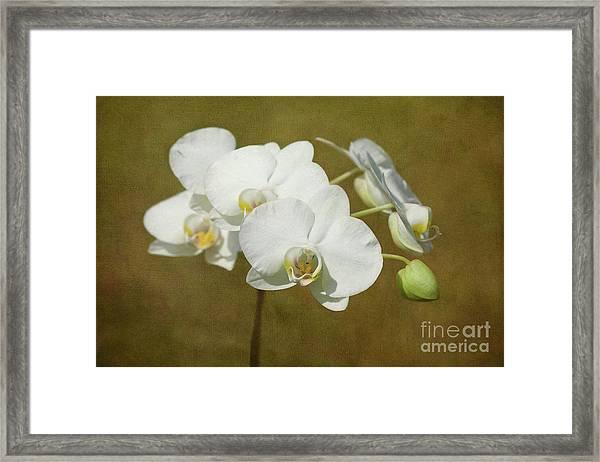 Brazen Beauty Framed Print