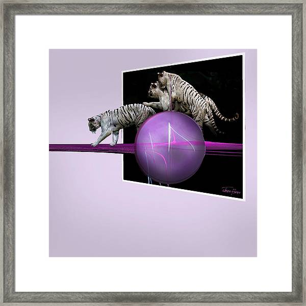 Breaking Out White Tigers Framed Print