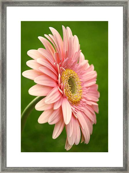 Breathe In Framed Print