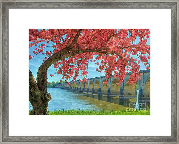 Beautiful Blossoms Framed Print