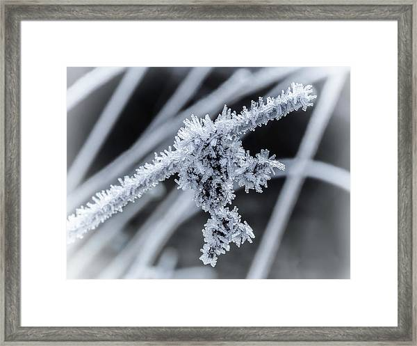 Framed Print featuring the photograph Briefly Beautiful by Nick Bywater