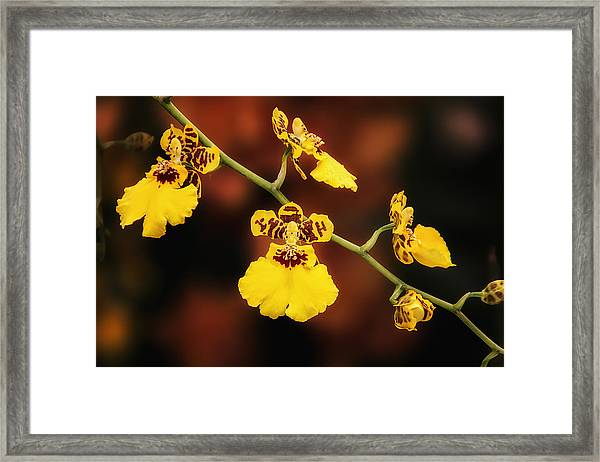 Bright And Beautiful Orchids Framed Print