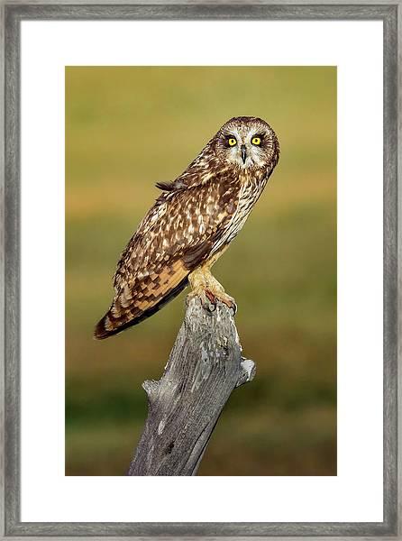 Bright-eyed Owl Framed Print