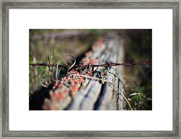 Bright Lichen Framed Print