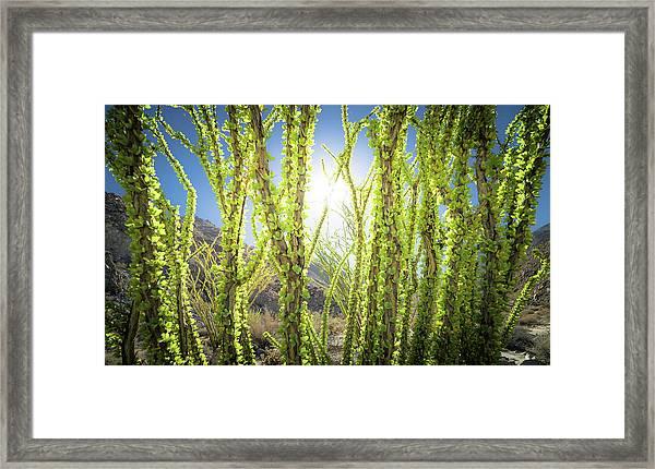 Bright Light In The Desert Framed Print