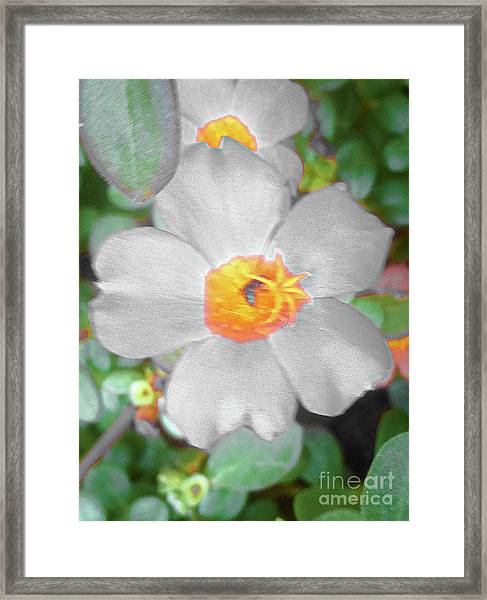 Bright White Vinca With Soft Green Framed Print