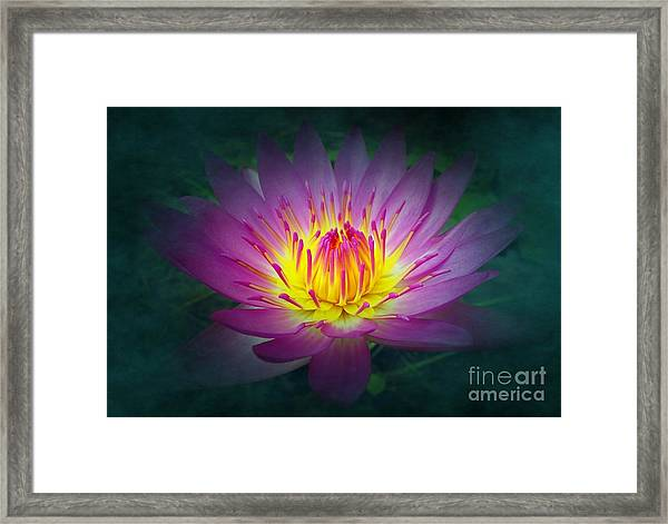 Brightly Glowing Lotus Flower Framed Print