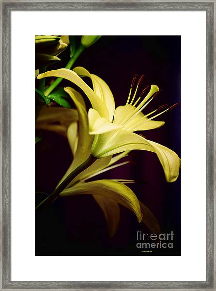 Brilliant Lily Framed Print