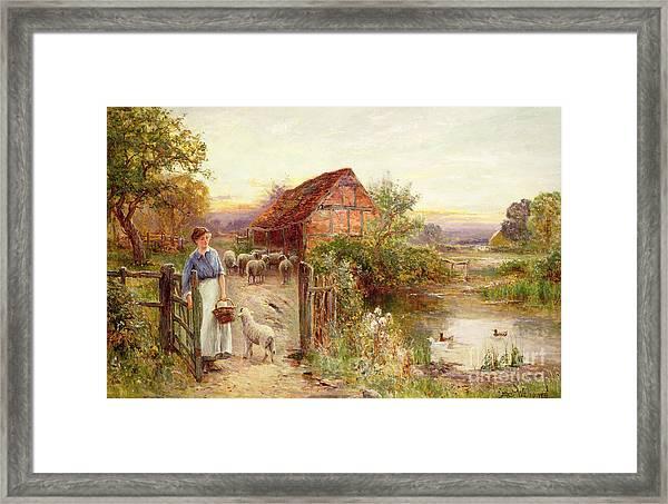 Bringing Home The Sheep Framed Print