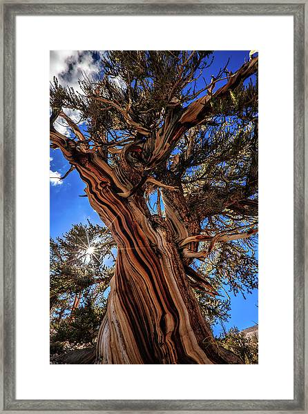 Listen To The Ancient One Framed Print