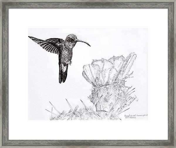 Broadbilled Hummingbird Framed Print