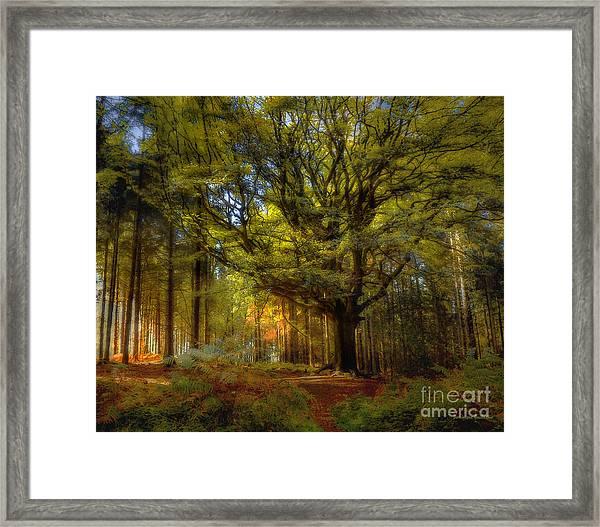 Broceliande Forest Framed Print