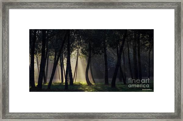 Broceliand's Light Framed Print