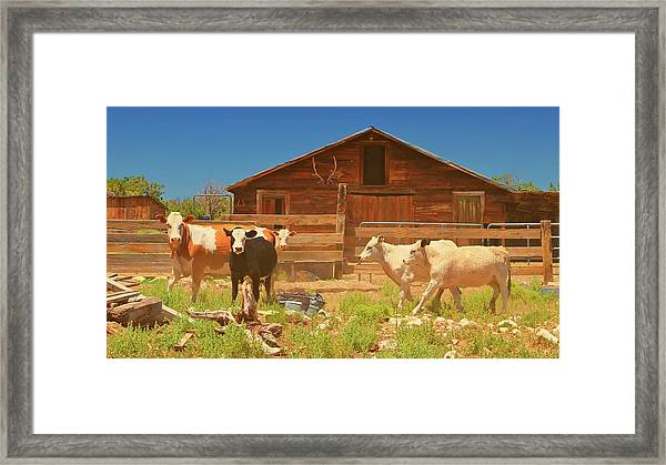 Broken Corral Winona Arizona Framed Print by Gus McCrea