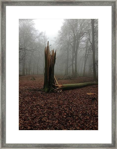 Broken Oak Framed Print