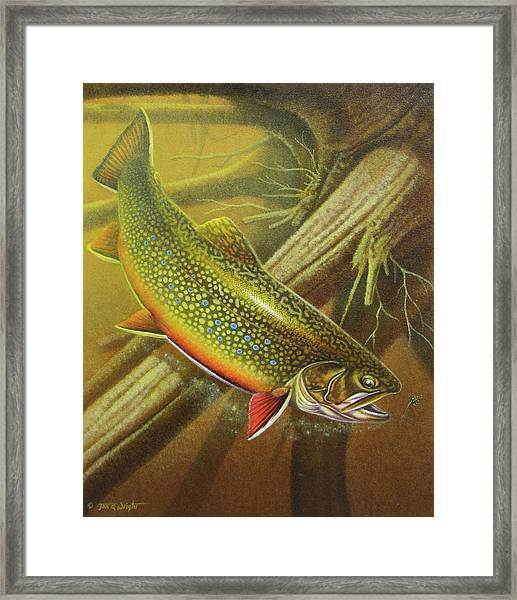 Brook Trout Cover Framed Print