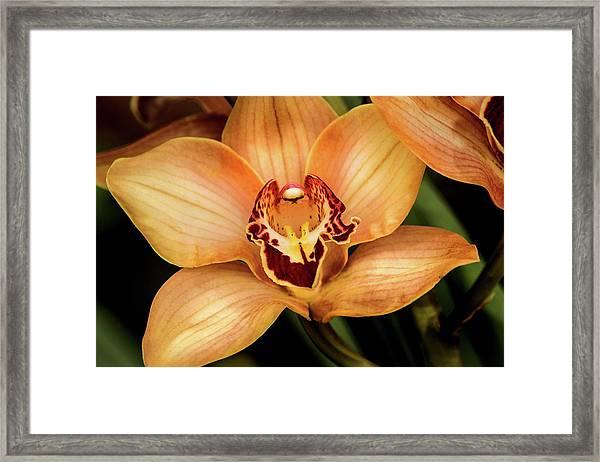 Brookside Orchid Framed Print