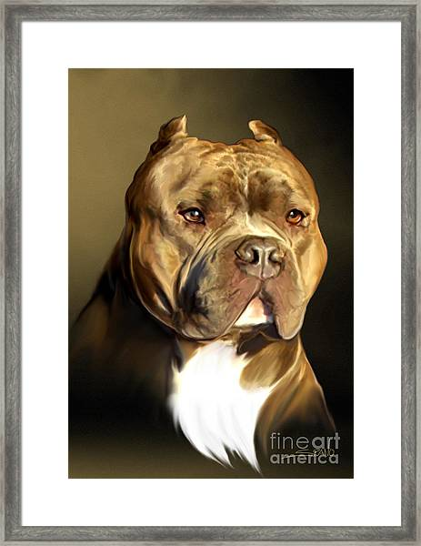Brown And White Pit Bull By Spano Framed Print