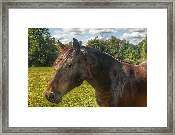 1001 - Brown Beauty I  Framed Print