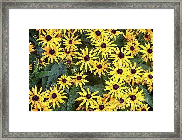 Framed Print featuring the photograph Brown Eyes On The Greenway by Susan Cole Kelly