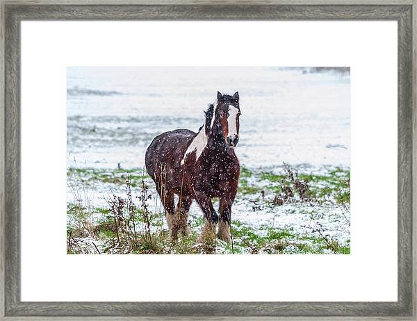 Framed Print featuring the photograph Brown Horse Galloping Through The Snow by Scott Lyons