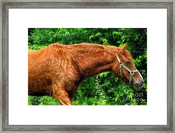 Brown Horse In High Definition Framed Print