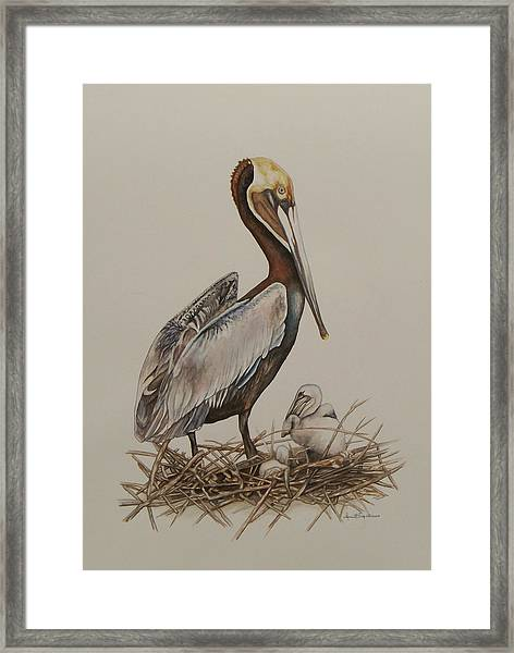 Brown Pelican And Chicks Framed Print