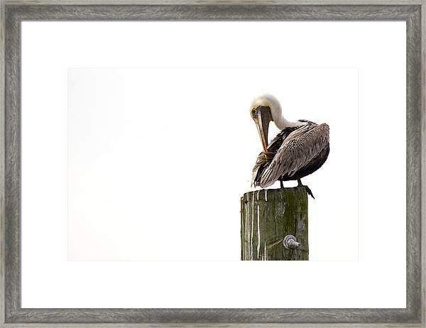 Brown Pelican On Piling Framed Print