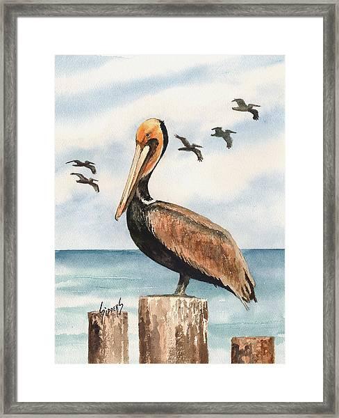 Brown Pelicans Framed Print