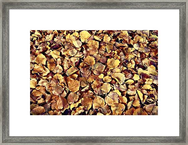 Browning Leaves Framed Print