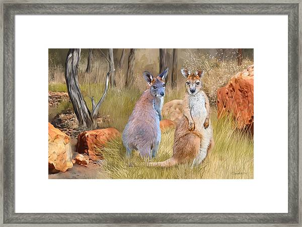Brumbie And Byron Framed Print by Samantha Tro