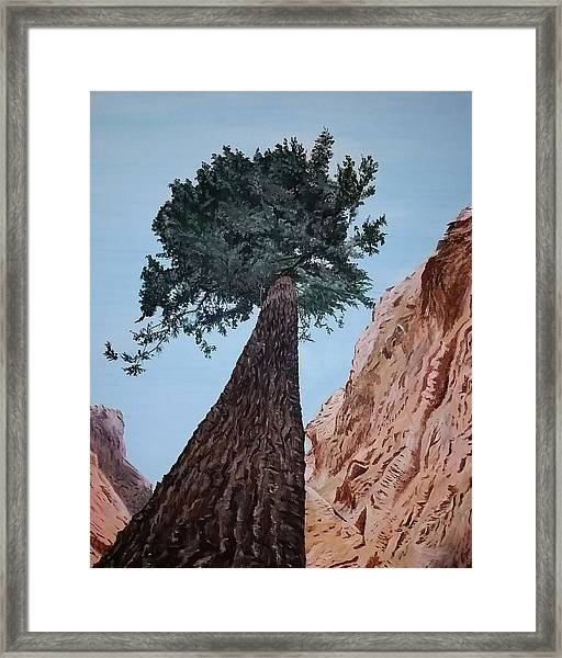 Framed Print featuring the painting Bryce Pine by Kevin Daly