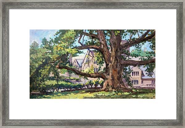Bryn Mawr Tree Wide Reach Framed Print