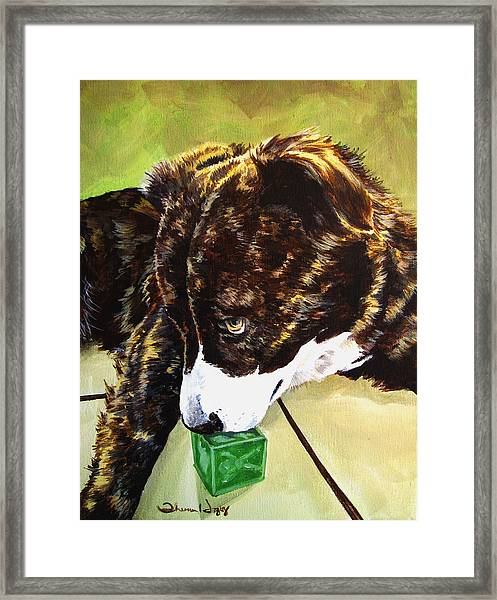 Bryndals Toy Framed Print by Theresa Higby