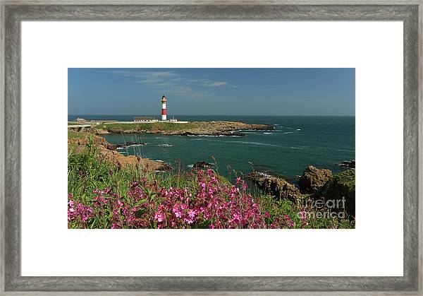 Buchan Ness Lighthouse And Spring Flowers Framed Print