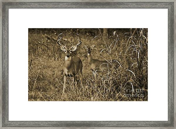 Buck And Doe In Sepia Framed Print