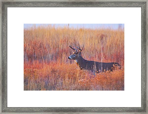 Framed Print featuring the photograph Buck Deer In Morning Sunlight by John De Bord