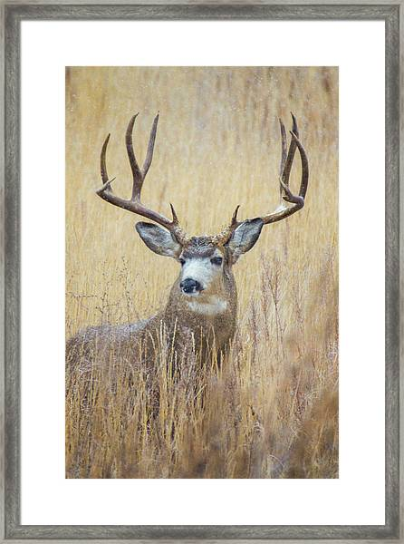 Framed Print featuring the photograph Buck In Snow by John De Bord