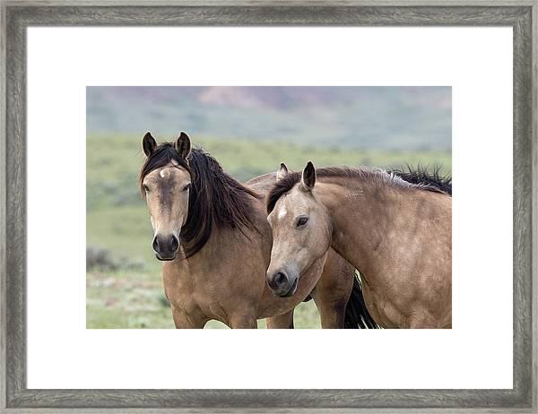 Buckskins Framed Print
