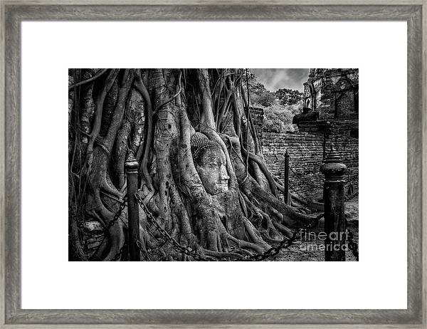 Buddha Head Ayutthaya Framed Print