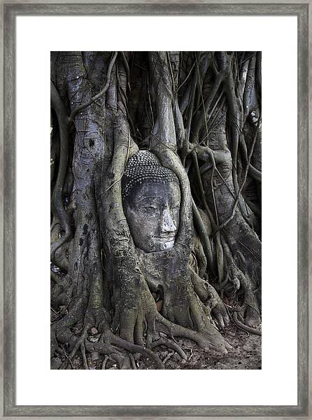 Buddha Head In Tree Framed Print