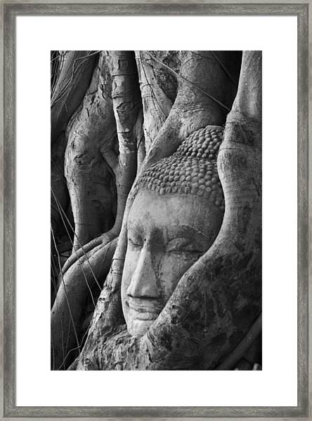 Buddha Head Framed Print by Jessica Rose