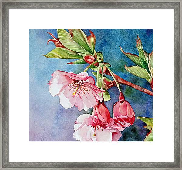 Budding Blossoms Framed Print