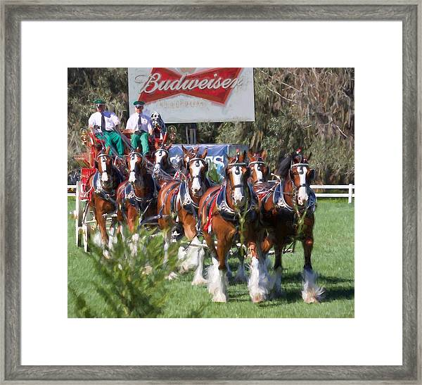 Budweiser Clydesdales Perfection Framed Print