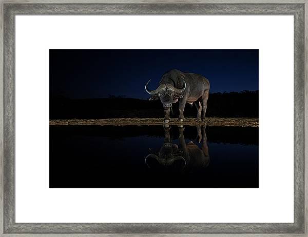 Buffalo After Sunset Framed Print