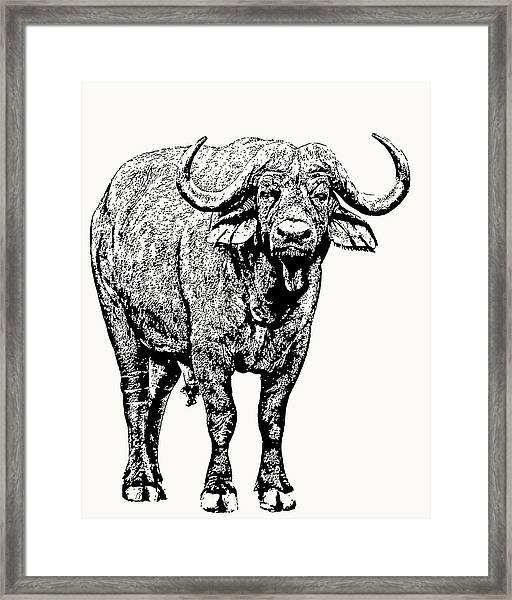 Buffalo Bull, Full Figure Framed Print
